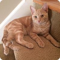 Adopt A Pet :: Prancer - Carlisle, PA