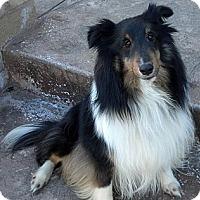 Adopt A Pet :: Luke - La Habra, CA