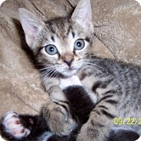 Adopt A Pet :: Teddy - Island Park, NY