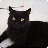 Adopt A Pet :: Samantha - Coral Springs, FL