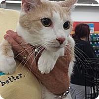 Adopt A Pet :: Floppsy - Edmond, OK