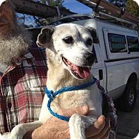 Rat Terrier Mix Dog for adoption in Slidell, Louisiana - Joan