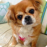 Adopt A Pet :: Holly - Fennville, MI