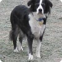 Adopt A Pet :: Bella - Charlottesville, VA