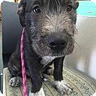 Adopt A Pet :: Don Draper