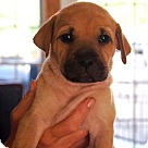 Adopt A Pet :: Melanie