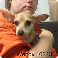 Adopt A Pet :: Wendy - baltimore, MD
