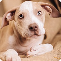 Adopt A Pet :: Garth - Portland, OR