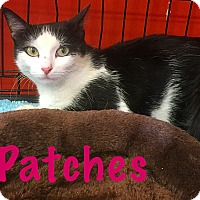 Adopt A Pet :: Patches - Cerritos, CA
