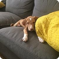 Adopt A Pet :: Ginger - Daleville, AL