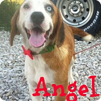Adopt A Pet :: Angel - Brazil, IN