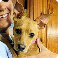 Adopt A Pet :: Mona - Naugatuck, CT
