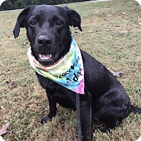 Adopt A Pet :: LuLu - Boston, MA