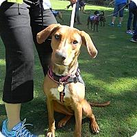 Adopt A Pet :: Reeses - Lebanon, CT