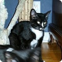 Adopt A Pet :: Nixon - McHenry, IL