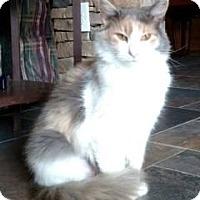 Adopt A Pet :: Harper - McDonough, GA