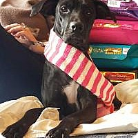 Adopt A Pet :: Izzy - Marlton, NJ