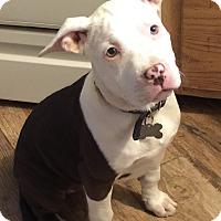 Adopt A Pet :: Rowan - Mission Viejo, CA