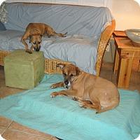 Adopt A Pet :: teddy - Sebring, FL