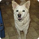 Adopt A Pet :: Mina