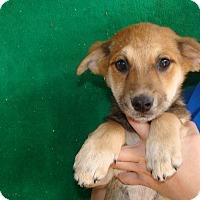 Adopt A Pet :: Frankie - Oviedo, FL