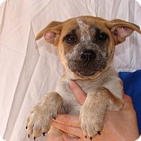 Adopt A Pet :: Cashmere - Oviedo, FL