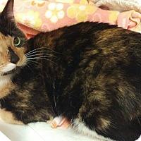 Calico Cat for adoption in Toledo, Ohio - Reese