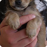 Adopt A Pet :: SALLY - Corona, CA