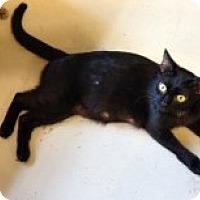 Adopt A Pet :: Serena - Orlando, FL