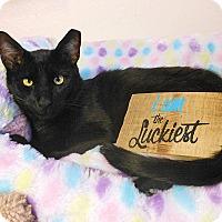 Adopt A Pet :: Zachariah - Glendale, AZ