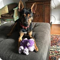 Adopt A Pet :: Gamble (Has application) - Washington, DC