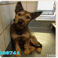 Adopt A Pet :: A400741 - San Antonio, TX