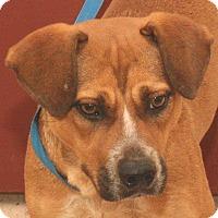 Adopt A Pet :: Sundae - McDonough, GA