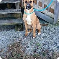 Adopt A Pet :: Radar - Cincinnati, OH