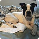 Adopt A Pet :: THOREAU