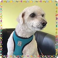 Adopt A Pet :: Bo - San Marcos, CA