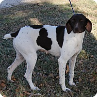 Adopt A Pet :: Laney - Parsons, KS