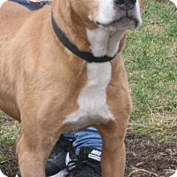 Adopt A Pet :: Tiffy - Staunton, VA