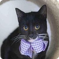 Adopt A Pet :: YVE - Houston, TX