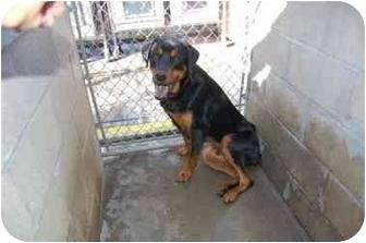 Deegan | Adopted Dog | MACS_Deegan | Tracy, CA ...