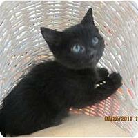 Adopt A Pet :: Kestral - Sterling Hgts, MI