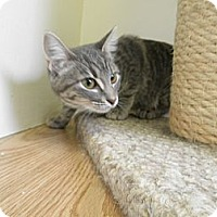 Adopt A Pet :: Toots - Milwaukee, WI