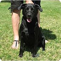 Adopt A Pet :: Jackie - Kingwood, TX