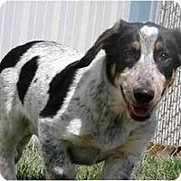 Adopt A Pet :: George - Meridian, ID