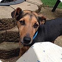 Adopt A Pet :: Jeb - Homewood, AL