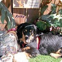 Adopt A Pet :: Fritz - Chandler, AZ