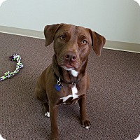 Adopt A Pet :: COCO - Malibu, CA
