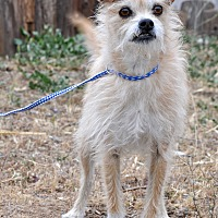 Adopt A Pet :: Jeffrey - Acton, CA