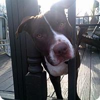 Adopt A Pet :: Magellan - Kimberton, PA