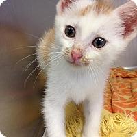 Adopt A Pet :: Squirt - East Brunswick, NJ